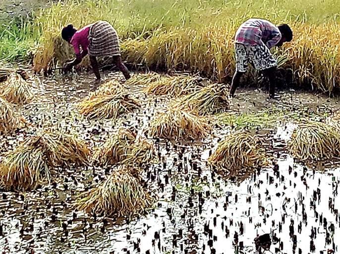 'Famine' even in the midst of crisis; Salt on peasant wounds | संकटग्रस्तांच्या मदतीतही 'दुष्काळ';शेतकऱ्यांच्या जखमेवर मीठ