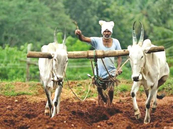Agri Tourism will now generate employment; Approval of the new policy of the State Government | आता कृषी पर्यटनातून होणार रोजगारनिर्मिती; राज्य शासनाची नव्या धोरणाला मान्यता