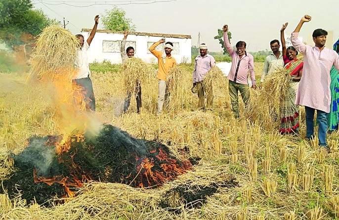 In the area of Nagpur Agricultural University farmers burnt paddy, | नागपुरात कृषी विद्यापीठाच्या परिसरात शेतकऱ्यांनी पेटविले धान