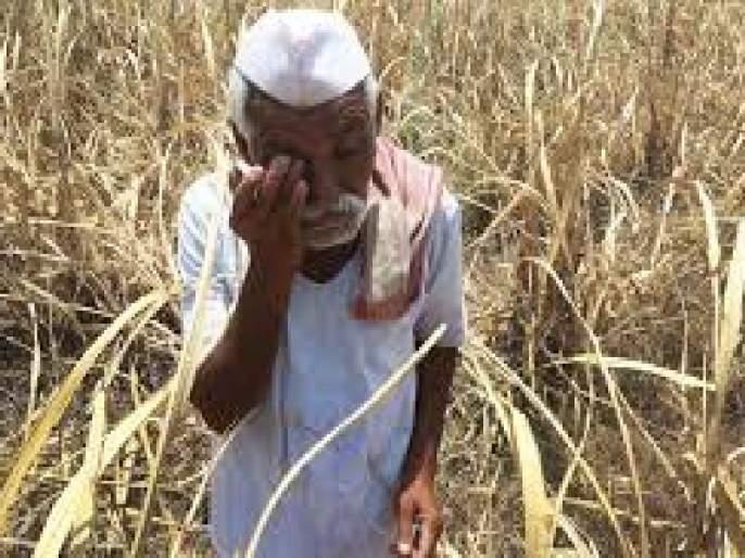 Farmers desperate to return to Dubere area | डुबेरे परिसरात परतीच्या पावसाने शेतकरी हतबल