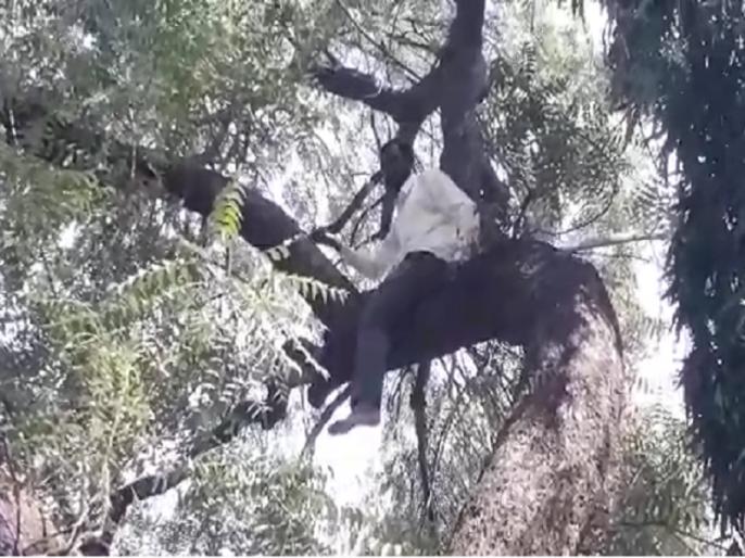 '.... only 26 rupees on account'; An angry farmer climbing a tree for crop insurance in Parabhani | '....खात्यावर फक्त २६ रुपये आहेत'; पीक विम्यासाठी उद्विग्न शेतकऱ्याचा झाडावर चढून आत्महत्येचा प्रयत्न