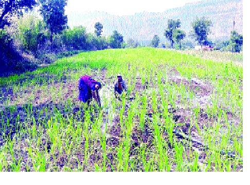 Farmers' hurry to participate in the Kisan Samman Yojana | किसान सन्मान योजनेतील सहभागासाठी शेतकऱ्यांची धांदल