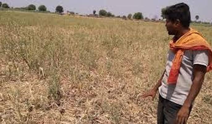 Waiting for help of 41 thousand farmers in Balapur taluka   बाळापूरतालुक्यातील ४१ हजार ५३३ शेतकऱ्यांना मदतीची प्रतीक्षा