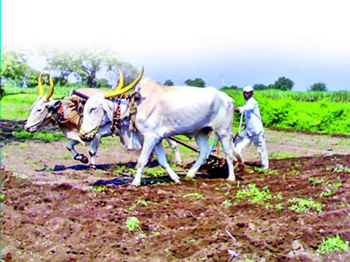 The sowing of the Rabbi was done on 9 lakh 25 thousands hectares | रब्बीच्या सव्वानऊ लाख हेक्टरवरील पेरण्या उरकल्या