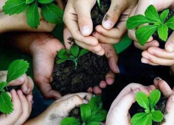 Prohibition of foreign seedlings; Action to be taken against foresters | मनाई झुगारून विदेशी रोपांची निर्मिती; वनाधिकाऱ्यांविरूद्ध होणार कारवाई