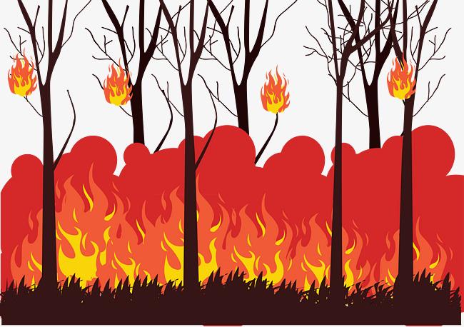 Thousands of plants burn to hide corruption in plantation! | कागदोपत्री लागवडीमुळेच पेटली वनीकरणाची हजारो झाडे!