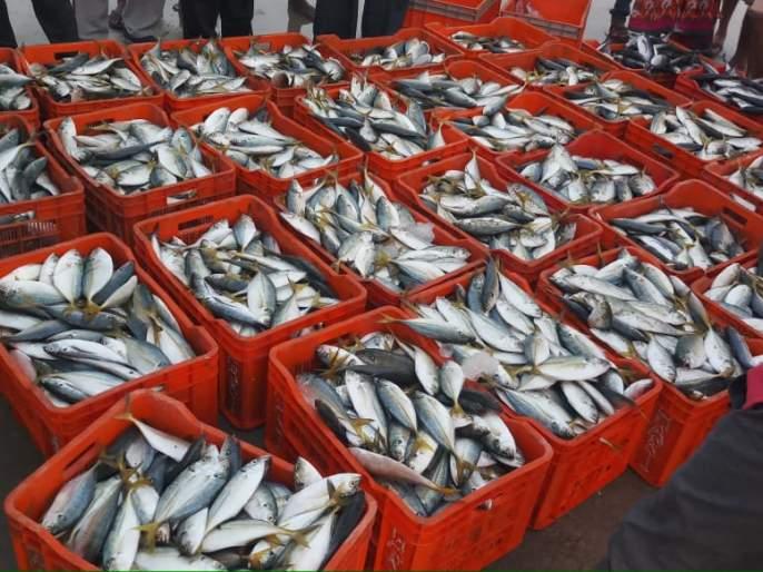 Action on those LED boats, alerting the fish department | त्याएलईडी नौकेवर कारवाई, मत्स्य विभाग सतर्क