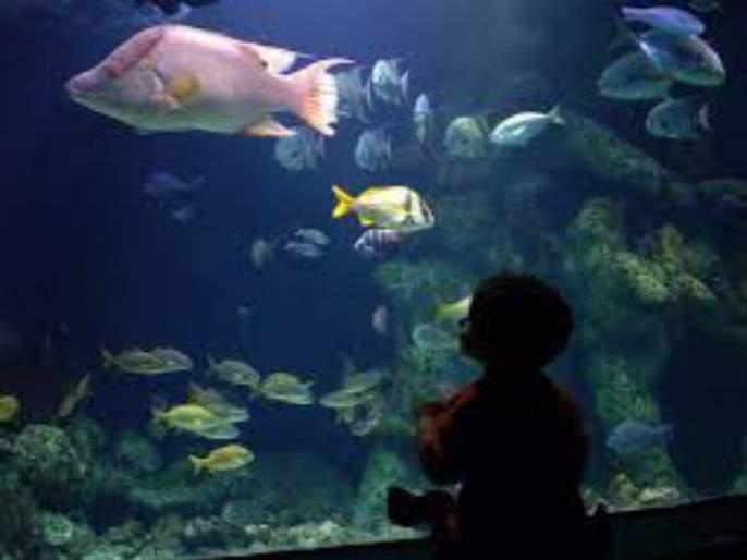 Proposals for setting up a world-class aquarium in Mumbai | मुंबईत जागतिक दर्जाचे मत्स्यालय उभारण्यासाठी प्रस्ताव