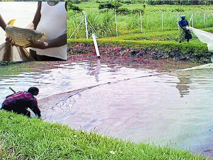 business opportunity of integrated farming india earn more than 50 lacs in a year | शेतीतून 'तो' कमावतो वर्षाला 50 लाख रुपये, आपल्यालाही पैसा कमावण्याची संधी