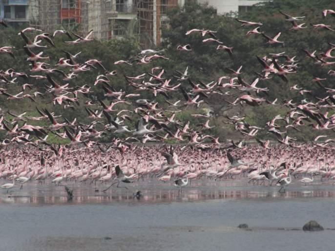 Thousands of migratory birds die mysteriously in Rajasthan's Sambhar Lake | धक्कादायक! राजस्थानमध्ये हजारो पक्ष्यांचा संशयास्पद मृत्यू