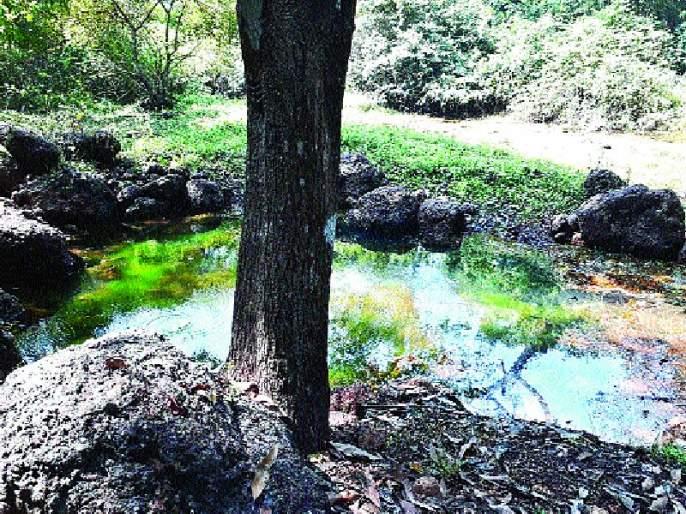 Unauthorized breaking of well trees; Five were in custody   खैर झाडांची अनधिकृत तोड; पाचजण ताब्यात