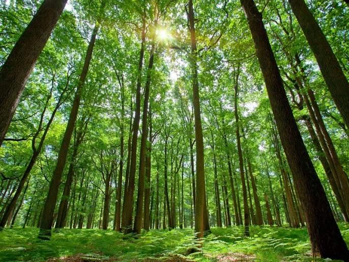 Bio Diversity Day: Rich Bio-forest, True value! | Bio Diversity Day : समृद्ध जैव-वन, हेची खरे धन..!