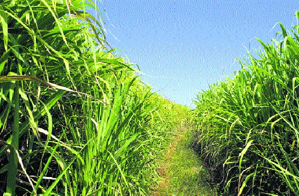 80 percent of FRP deposits on farmers' accounts - 20 percent of sugar farmers are not compelled - Sanjay Kolle | शेतकऱ्यांच्या खात्यावर ८० टक्केच एफआरपी जमा- वीस टक्के साखरेची शेतकºयांना सक्ती नाही - संजय कोले