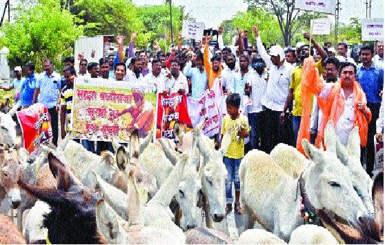 Sangli: The donkey front of the 'deprived Bahujan'   सांगली : 'वंचित बहुजन'चा गाढव मोर्चा