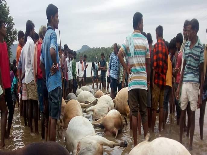 16 animals die and 33 disappeared in water in gadchiroli | नाल्यातील वीज प्रवाहाने 16 जनावरांचा मृत्यू, 33 बेपत्ता
