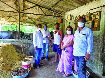The Animal Husbandry Department rushed to eradicate Gochid   गोचीड निर्मूलनासाठी पशू विभाग सरसावला