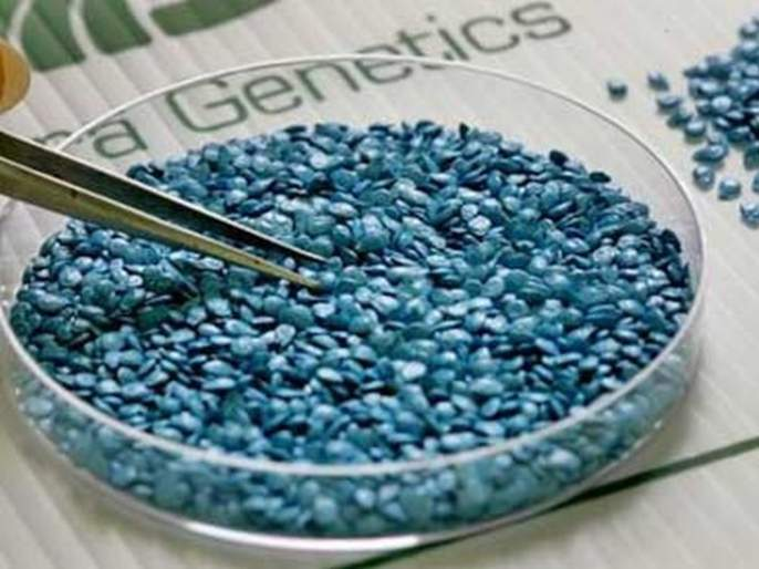 Issue of Genetically Modified Seeds pending | जनुकीय सुधारित बियाण्यांचे भिजत घोंगडे