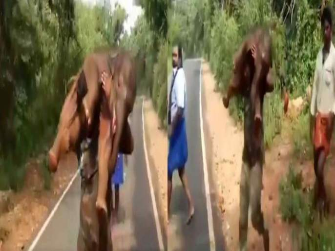 Forest guard rescued elephant baby trapped in mud then ran over shoulder to introduce mother video viral | Forest guard rescued elephant : रिअल बाहुबली! हत्तीच्या पिल्लाला खांद्यावर घेऊन धावला गार्ड; अन् त्याला दिलं जीवदान