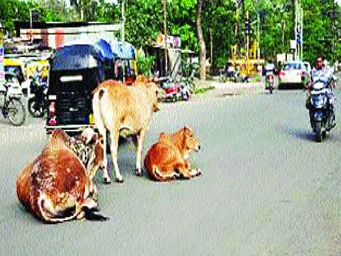Count ten thousand to rescue the Mokat cattle   मोकाट गुरांना सोडविण्यासाठी आता दहा हजार मोजा