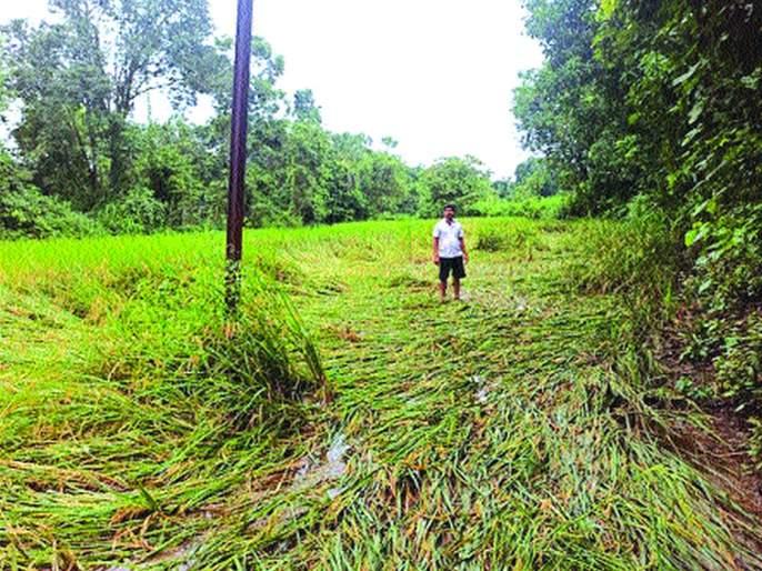 Loss of farmers due to heavy rains | अतिवृष्टीमुळे शेतकऱ्यांचे नुकसान