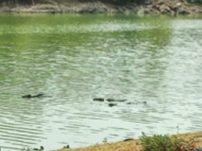 Birwadi period green color of river basin water   बिरवाडी काळ नदीपात्रातील पाण्याला हिरवा रंग