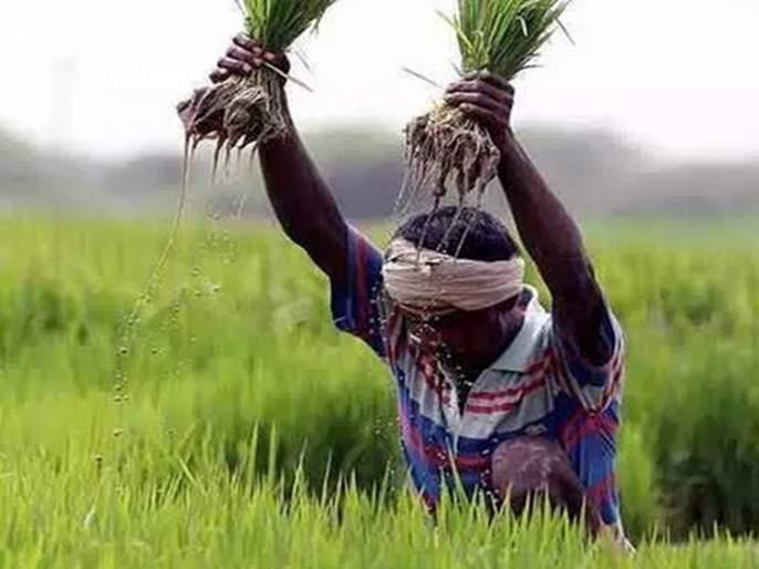 Crop insurance amount will be paid assuming panchnama   पंचनामे गृहित धरून पीकविम्याची रक्कम देणार