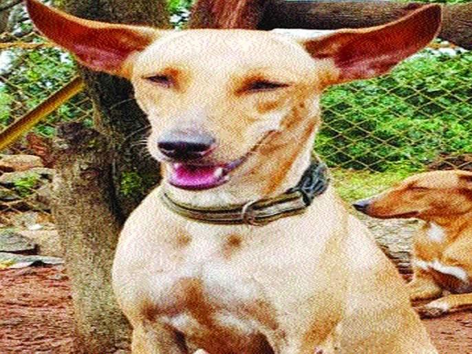 The rescue the stray dogs | भटक्या श्वानाचा बचाव केला म्हणून शिवीगाळ