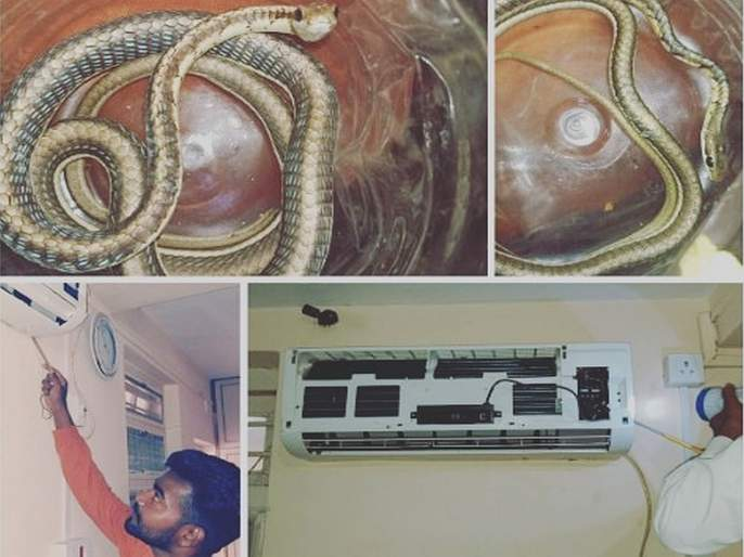 Snake lives in the air conditioner, the subject of kutush among the citizens | सापाचे वास्तव्य थेट एअर कंडिशनरमध्ये, नागरिकांमध्ये कुतूहलाचा विषय