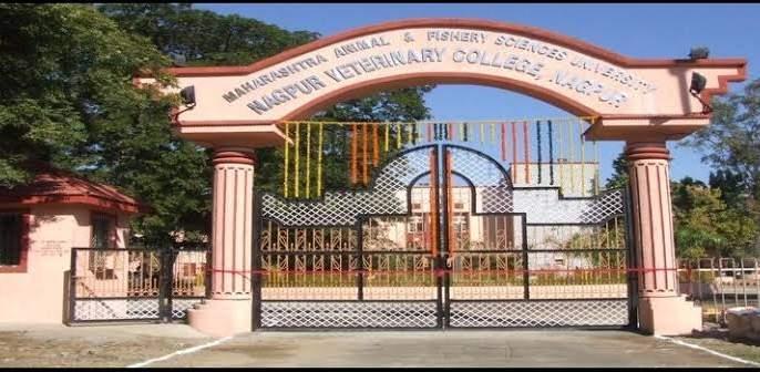 Veterinary Degree College Admission stalled | पशुवैद्यकीय पदवी महाविद्यालयाचे प्रवेश रखडले