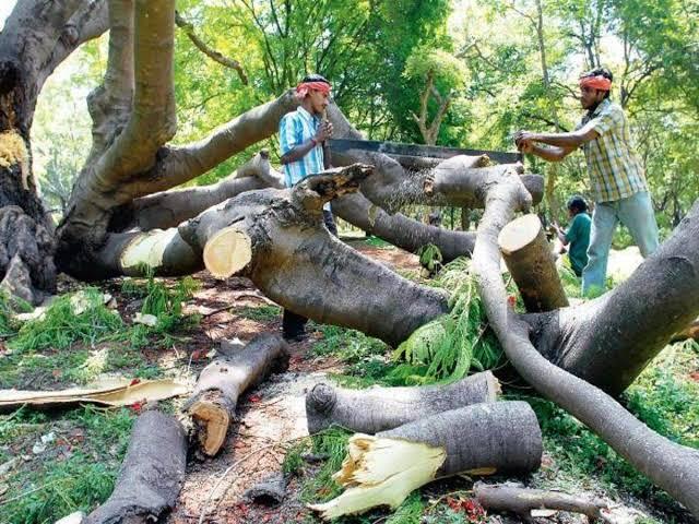 In the last 5 years, more than 1.09 crore trees were cut; Information of the Central Government in the Rajya Sabha   गेल्या ५ वर्षात १ कोटींपेक्षा अधिक झाडे कापण्यात आली; केंद्र सरकारची राज्यसभेत माहिती