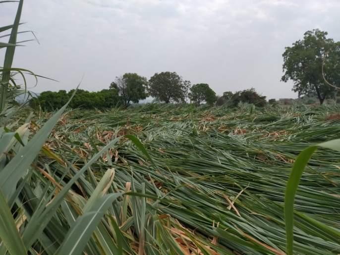 The rains broke the back of the farmers; Major loss of crop yields | अवकाळी पावसाने शेतकऱ्यांचे कंबरडे मोडले; काढणीला आलेल्या पिकाचे मोठे नुकसान
