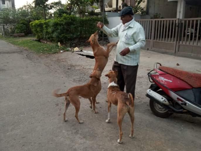 Corona in kolhapur: Distribute food to dogs during lockdown | Corona in kolhapur : लॉकडाऊनच्या काळात कुत्र्यांना अन्न वाटप