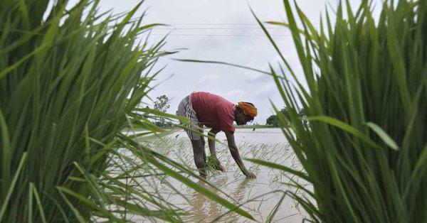 Deteriorating rainfall is worrying day by day | पावसाचे घटणारे प्रमाण दिवसेंदिवस चिंताजनक
