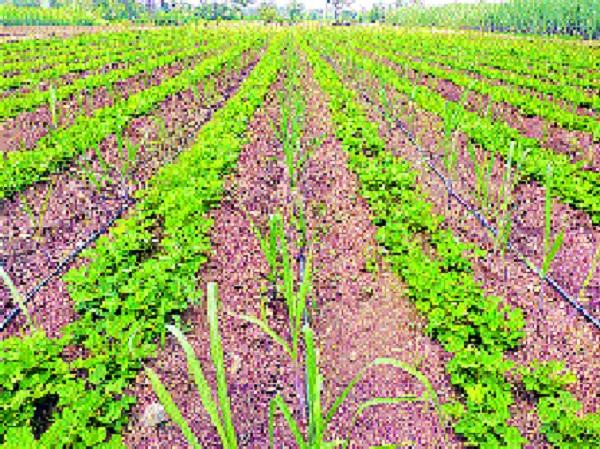 Palus taluka Taryl Laxa irrigation schemes-: Water available for agriculture   पलूस तालुक्यास तारले उपसा सिंचन योजनांनी- : शेतीसाठी पाणी उपलब्ध