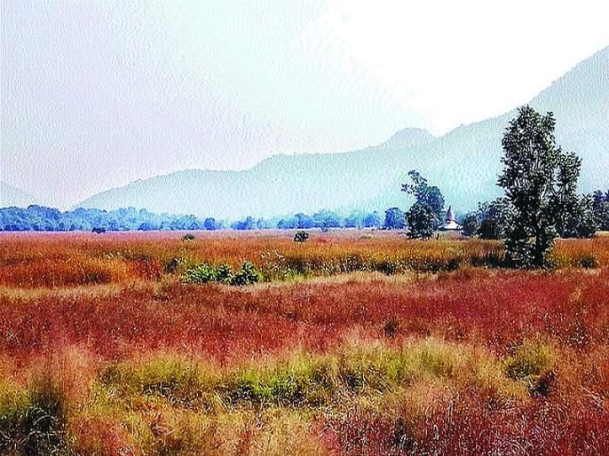 Pollution hits farmers in Mahad | महाडमध्ये प्रदूषणाचा शेतकऱ्यांना फटका