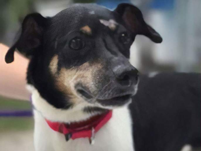 This brave dog sacrifices himself to save his entire family from burning house | परिवाराचा जीव वाचवण्यासाठी कुत्र्याने गमावला स्वत:चा जीव!