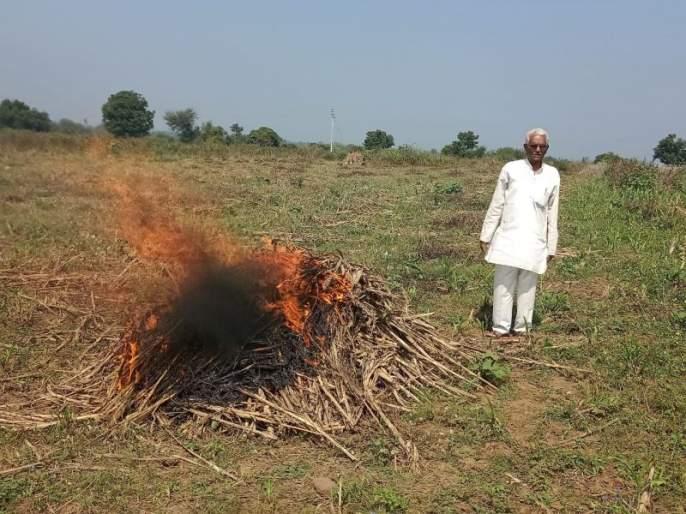 A tidal wave burned by a farmer fed by wildlife distress | वन्यप्राण्यांच्या त्रासाला कंटाळलेल्या शेतकऱ्याने पेटवून दिली ज्वारीची सुडी