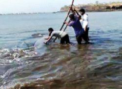 Adgaon shore shark fish gave life | आदगाव किनारी शार्क माशाला दिले जीवदान