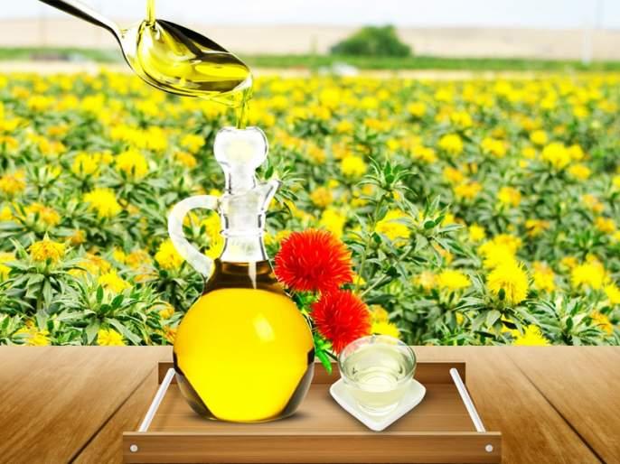 Krishi University's purified Kardai oil! | आता कृषी विद्यापीठाचे शुध्द करडी तेल !