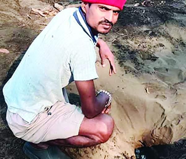 872 turtle eggs were found on the shores of Tawasal | तवसाळ किनारी आढळली कासवांची ८७२ अंडी