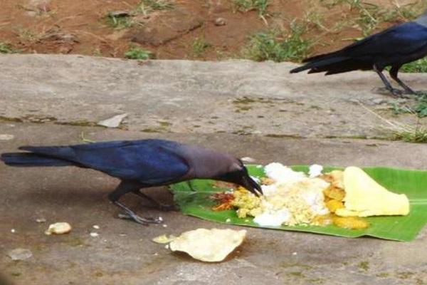 When will a ghost of a raven descend from a peanut?   जन्म-मृत्यूचा फेरा : कावळ्याचे भूत मानगुटीवरून कधी उतरणार?