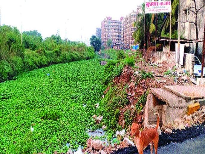 Fill up the main creek in the plain. Will the municipality take action? | समेळ पाड्यातील मुख्य खाडीवर भराव;पालिका कारवाई करणार?