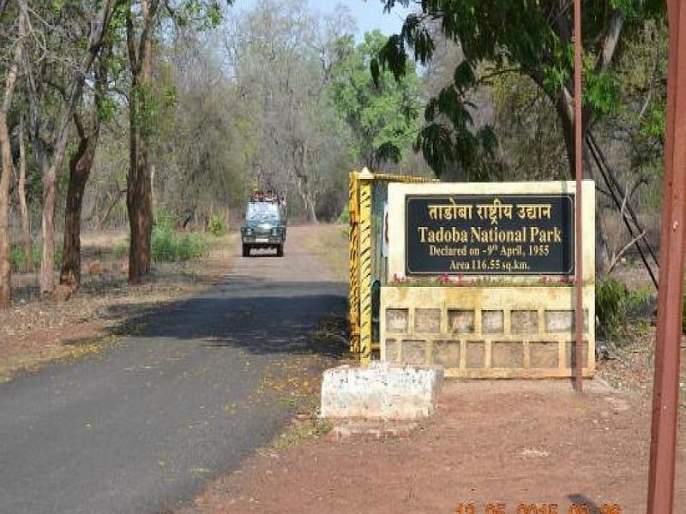 Tree plantation in 'Tadoba' to break the cliff in Mumbai | मुंबईतील कोंडी फोडण्यासाठी 'ताडोबा'त वृक्षलागवड