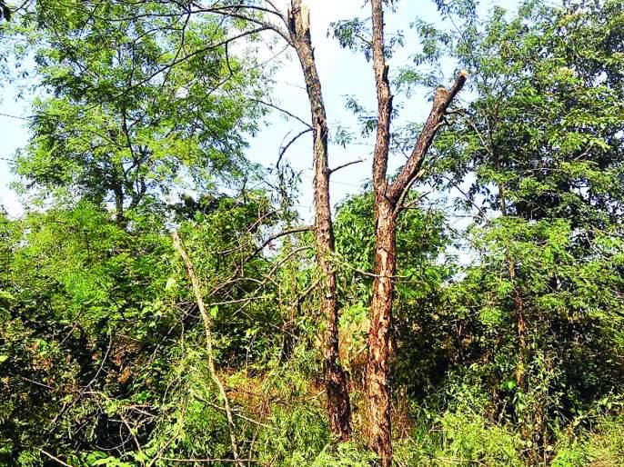 Ratnagiri: Damage due to tree lying on high school in Kondga | रत्नागिरी : कोंडगे येथे हायस्कूलवर झाड पडून नुकसान