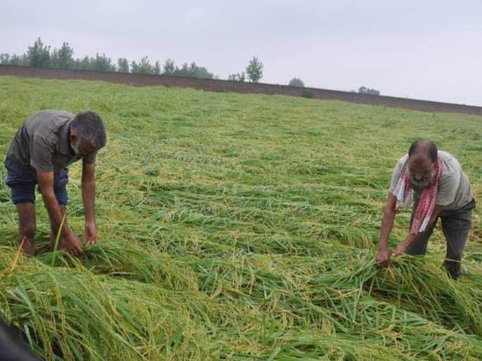 The casualty loss figure stands at 90 lakh hectares | खरिपातील नुकसानीचा आकडा ९४ लाख हेक्टरवर