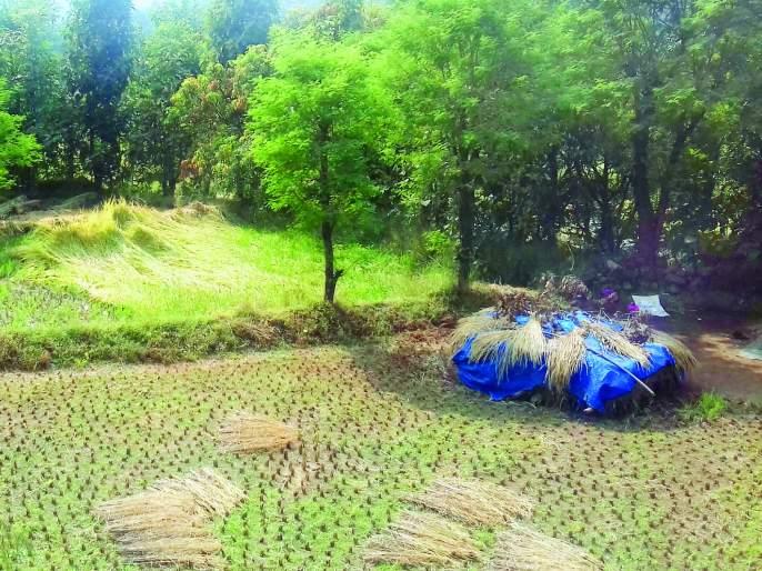 Loss of crores of water to the farmers of the village   खेडमधील शेतकऱ्यांची पावणेसात कोटींची हानी