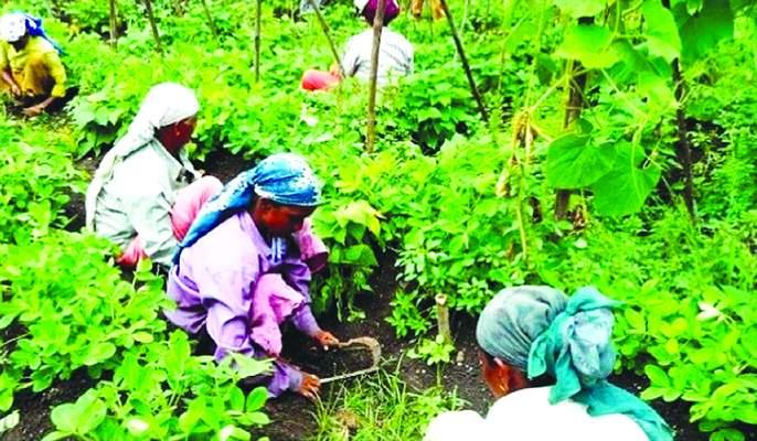 Farmers suffering from drought have also got costly farm labor | दुष्काळाने होरपळलेल्या शेतकºयांना आता शेतीतील मजुरीही झाली महाग