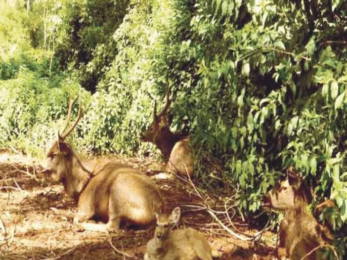 Half of the animals are extinct in the hills of Pune; Many people changed their residence due to the decline of Malra | पुण्याच्या टेकड्यांवरून निम्मे प्राणी लुप्तप्राय; माळरानं कमी झाल्याने अनेकांनी रहिवास बदलला