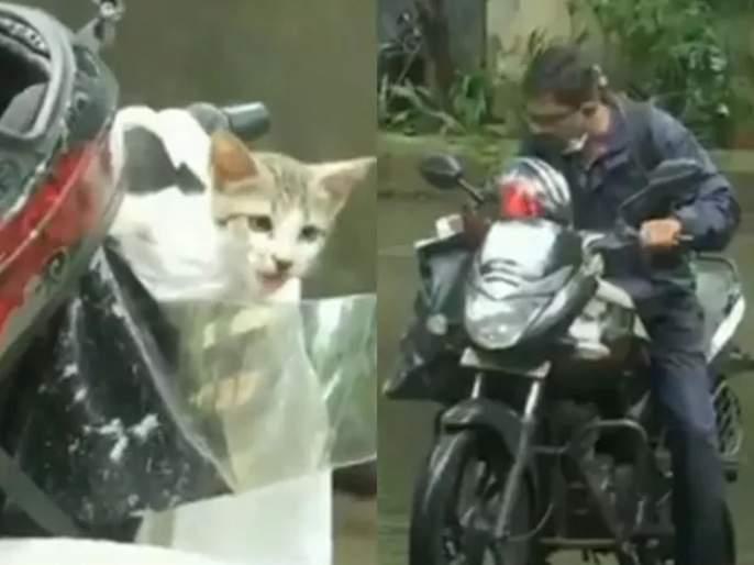 Video: This man save kitten in heavy rain of mumbai people are calling him hero | Video : रिअल हिरो! मुसळधार पावसात अडकलेल्या मनीमाऊचे बाईकस्वारानं वाचवले प्राण