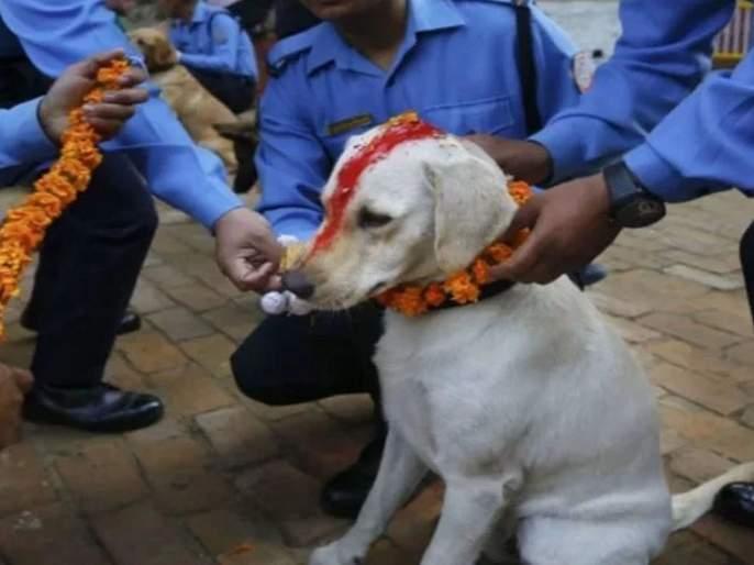 Nepal celebrate dog worship festival during Diwali | 'इथे' कुत्र्यांची पूजा करून साजरी केली जाते अनोखी दिवाळी, जाणून घ्या कारण
